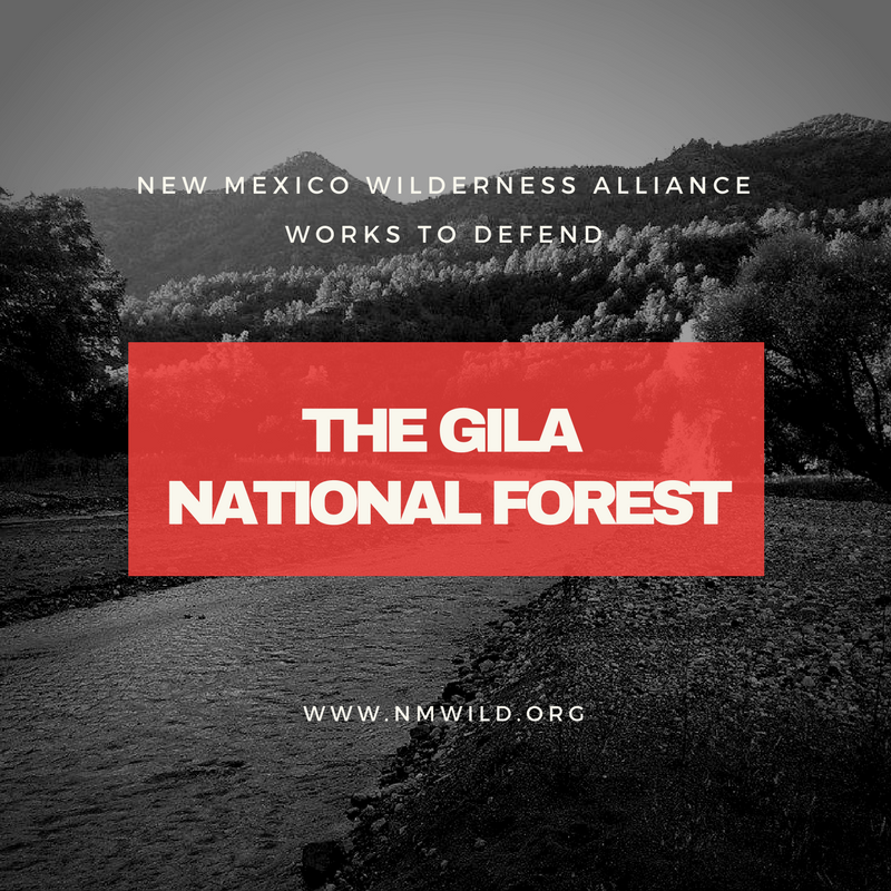 Gila Under Threat